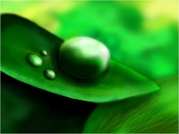 Nature Drop