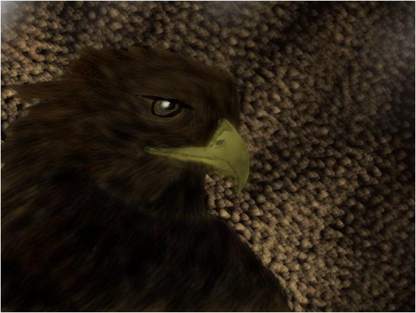 Eagle<3