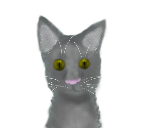 Cat (wip)
