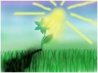 Sun-Flower-Shadow