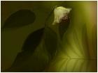 Delicate Flower