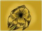 dying flower