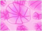 los flores imvisibles