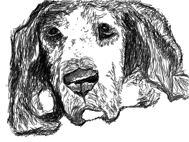 a beagle  :)