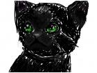 phylly cat