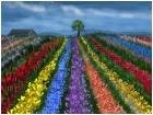 Flower Farm 11