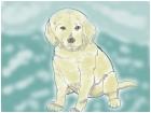the golden puppy