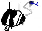 Ungulate upside down and Slinky snake