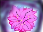 Hibiscus..? 0.0 lol xD