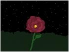 A Flower under Starlight