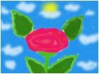 rose of dreams