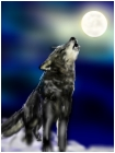 howling wolf:D