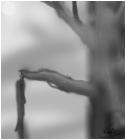 Dead Tree 1