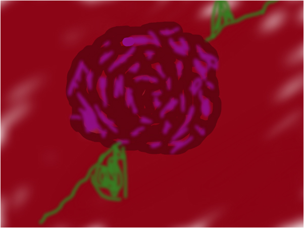 RED AND PURPLE ROSE