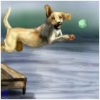 lab jumping into lake