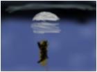 cat adrift