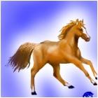 HORSEYYYY