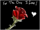 For The One I Love!