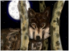 timber wolf in quakies