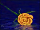 Rose on the water