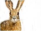 funny_bunny