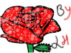 rain or snow rose