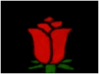 Alyssa's Rose