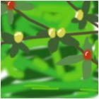 berrry bush