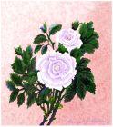 Those White Roses