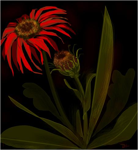 Plant Unknown