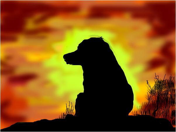 Greyhaund sunset