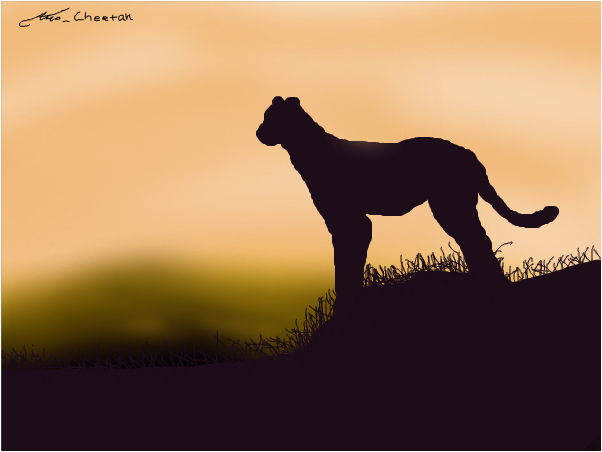 Attempt of a Cheetah Silhouette