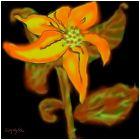 1st flower