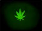 weed bro