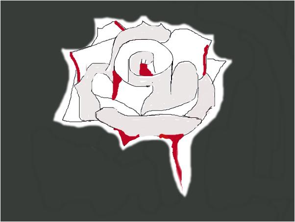 Snows rose