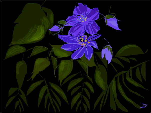 More Light Clematis