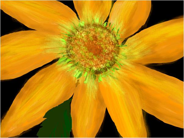 Jerusalem Artichoke Bloom