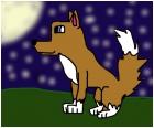 wolf at stary night!!!!!!!!!!!!!!!!