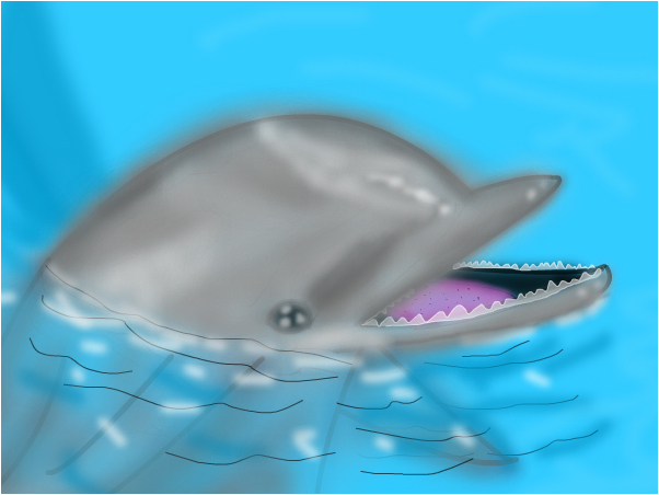 Dophin In a Pool