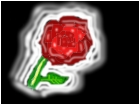A Glowing Rose!