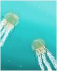 More Jellyfish!!!