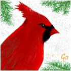 Cardinal In The Winter.